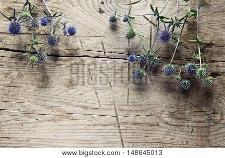 Wild Thistles, Thorns On Wooden Background