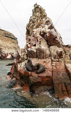 sea lion on rocky formation looking at the camera. Islas Ballestas, Paracas national reserve, Peru.