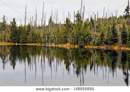 Autumn forest in Bavarian forest national park (Germany).