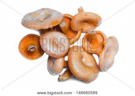 Bunch of orange Saffron Milk Cap mushrooms on white. Top view