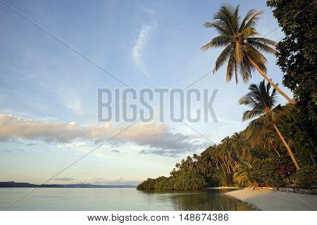 Palm Trees and Beach at Raja Ampat Dive Lodge on Mansuar Island. Raja Ampat Indonesia