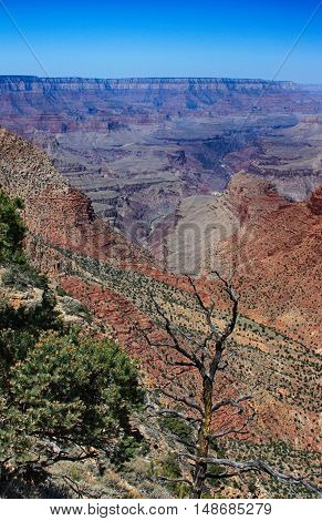 vista of Grand Canyon with buttes and greenery