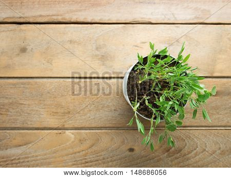 flower pot Placed on a wood table