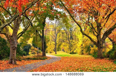 Autumn scenery in a park with warm colors leaves on the lawn and a footpath leading into the scene