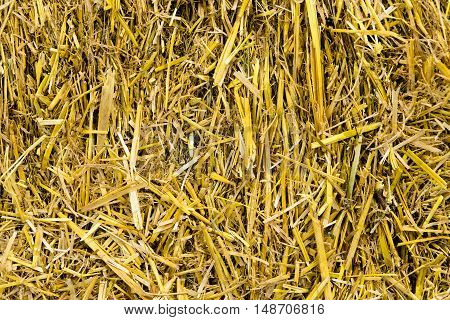 Picture of dried yellow hay pattern texture background. Hey seamless background. In pile of straw texture background.
