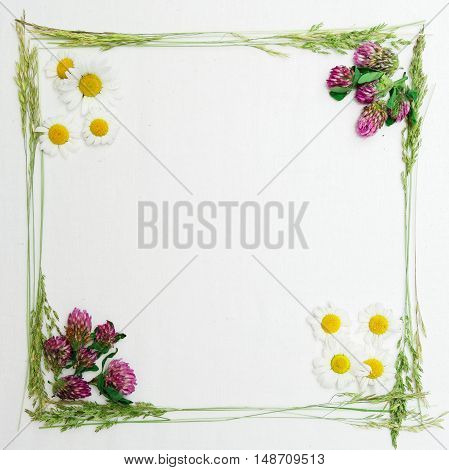 Frame Of Clover And Chamomile And The Field Grass