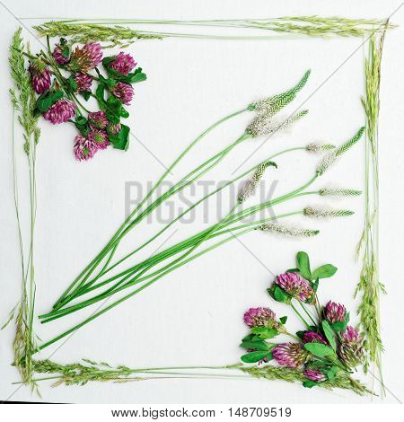 Frame Of Clover And Field Grass On White