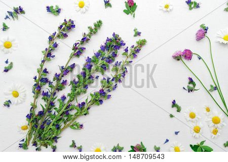 Frame Of Field Flower Clovers And Chamomile