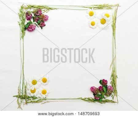 Frame With Clover And Chamomile And The Field Grass