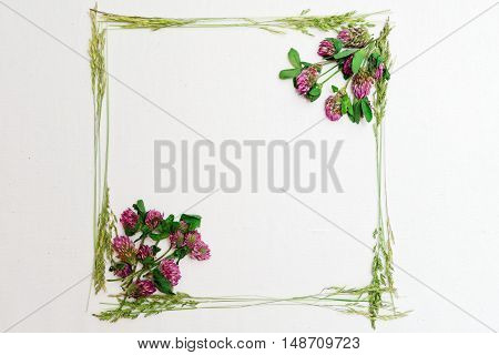 Frame With Clover And Field Grass On White
