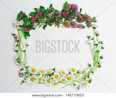 Wreath Of Clover And Chamomile And Daisy On White