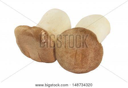 Pleurotus Eryngii or King oyster mushroom on white background