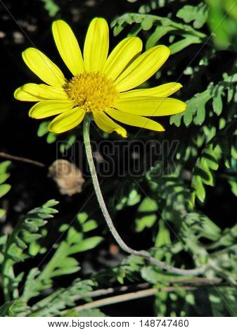 Bright Yellow Flower With Green Back Ground 01a