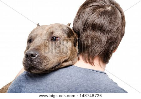 Portrait of a pitbull on the shoulder of its owner isolated on white background