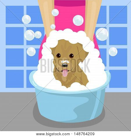 pet groomer washing a dog with soap foam in blue wash-basin in bathroom