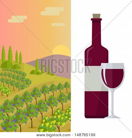 Grapes leaves in a sunny vineyard. Bottle with label and glass of red wine. Vineyard langscape. Rural landscape with vineyard and grapes bunches. Landscape with rolling hills and valleys.