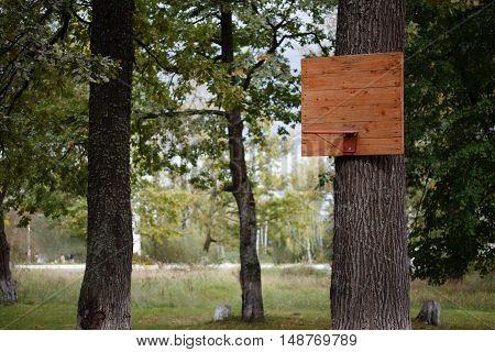 Street Sport. Wooden basketball backboard in a park on a tree.