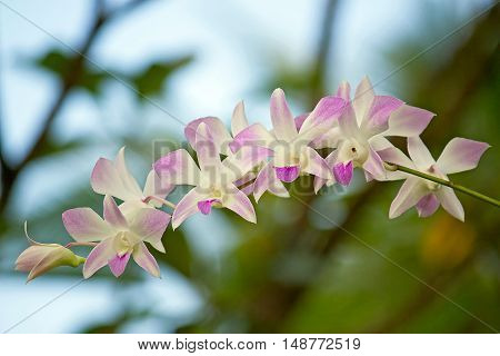 Beautiful flowers of orchids close up.Horizontal shot.
