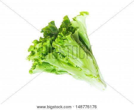 Lettuce isolated. Lettuce  salad isolatet on white background
