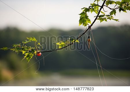 Fishing line getting caught in a tree branch.