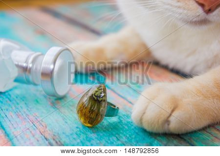 Ring with dried dandelion flower inside crystal made of epoxy resin close-up on the backdrop of blue old wooden surface and white perfume bottle lies and paws and nose of red-white cat near with it