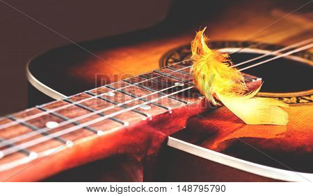 decorative plumelet lying on the strings of an old yellow guitar