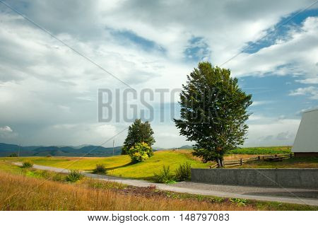 road and single tree on field of valley