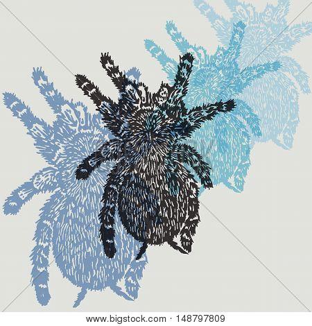 Linocut Tarantula on background. Vector Illustrated frame from Tarantula spiders.