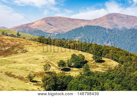 Trees On Meadow In Mountains