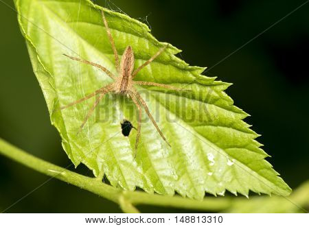 Close up photo of a spider on a leaf