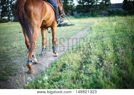 horse with rider is on the path field, space for text. equitation.
