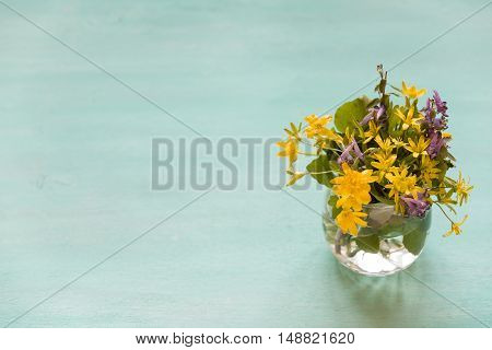 Beautiful bunch of wild spring flowers in a glass vase on the turquoise background. Spring bouquet of yellow and blues flowers.