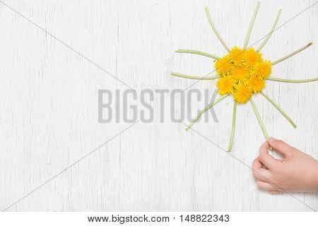 Kid's hand and small yellow sun made of dandelions on the white wooden background. Top view. Spring Summer concept. Flowers on white background. Child making sun of dandelions.