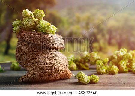 Burlap sack filled with hops for beer making