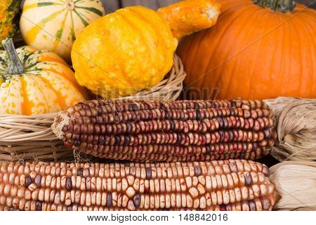 Autumn indian corn with squash and pumpkin