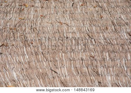 Close up dry straw thatch roof of traditional Thai house.