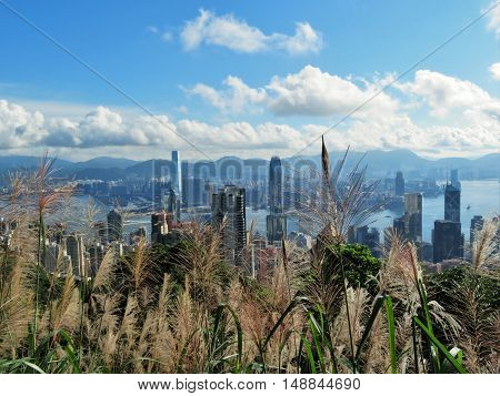 Hong Kong and the harbor from the mountain trails.