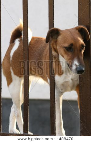 Nice dog looking throung the lattice from the garden poster