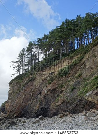 Forest upon rocky beach cliff seascape photographed at Amroth in Pembrokeshire