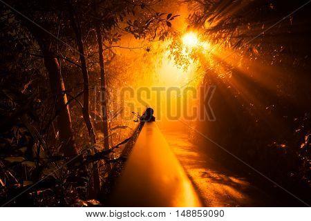 park path amidst oak trees at night,orange toned,china.