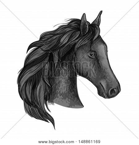 Black graceful horse portrait. Raven mustang with wavy mane strands and half turned head