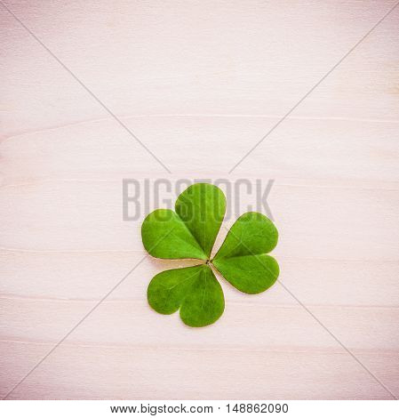Toned Of Clovers Leaves On Wooden Background .the Symbolic Of Leaves Clovers The First Is For Faith,