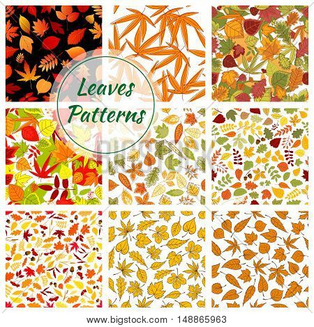 Autumn plants and trees leaves. Seamless patterns of bright and colorful foliage elements. Vector pattern of small and large birch, oak, maple, brown, elm leaf on white and black background