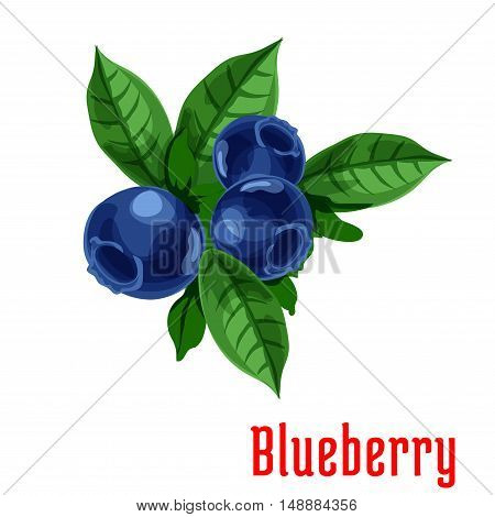 Blueberry fruits. Isolated bunch of blueberries on stem with leaves. Botanical product emblem for juice or jam label, packaging sticker, grocery shop tag, farm store