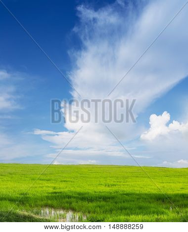 Green field and blue sky nature background