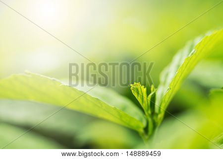 green leaves background, bature back ground .