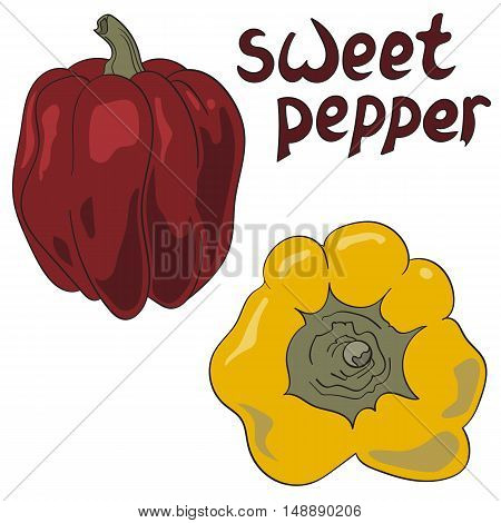 Set of colored bell peppers vector illustration