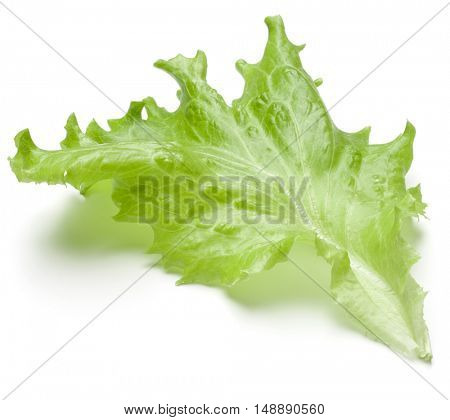 Fresh lettuce salad leaf isolated on white background cutout