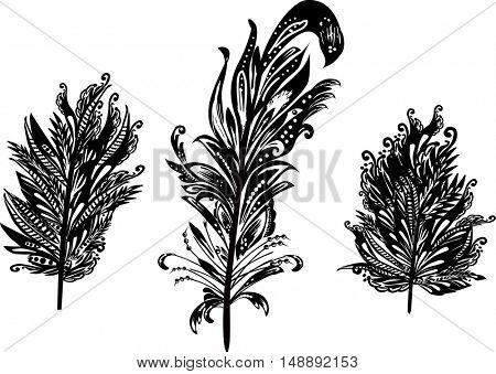 illustration with abstract decorated black feathers isolated on white background
