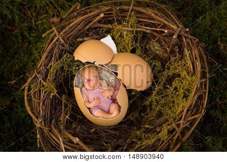 Adorable newborn baby sleeping in a broken egg in a nest.  Also available without the baby as a digital backdrop for your own baby.
